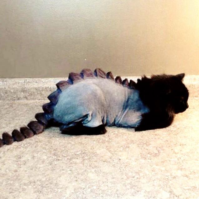 Dino-cat sweet summer cut