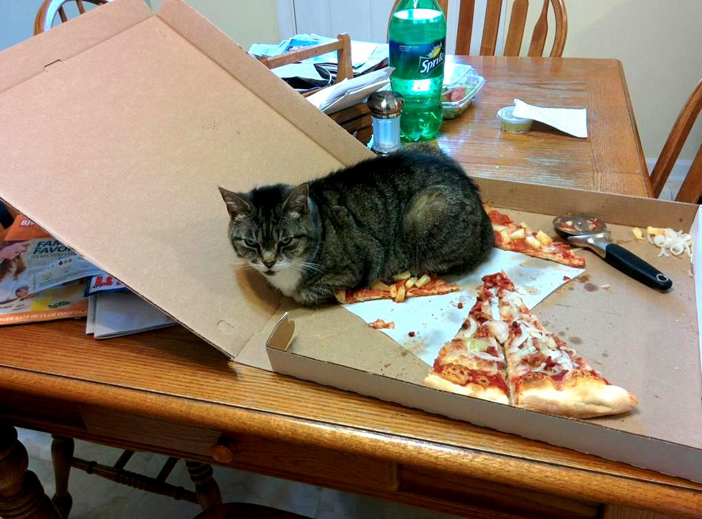 Do not eat cats pizza