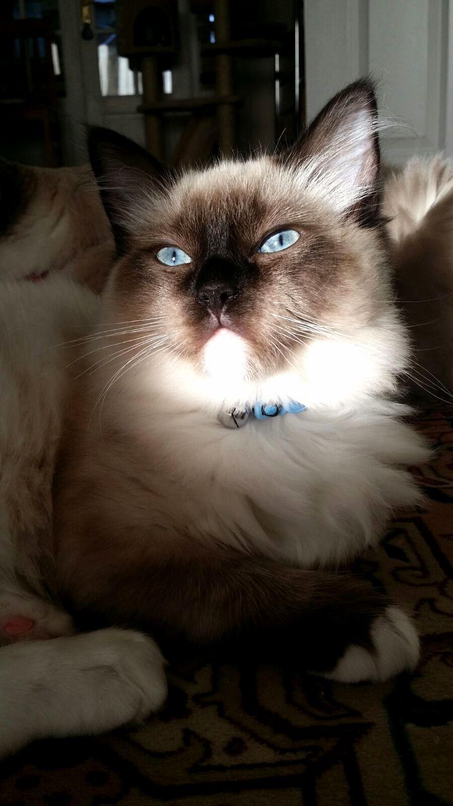 Fergus looking majestic