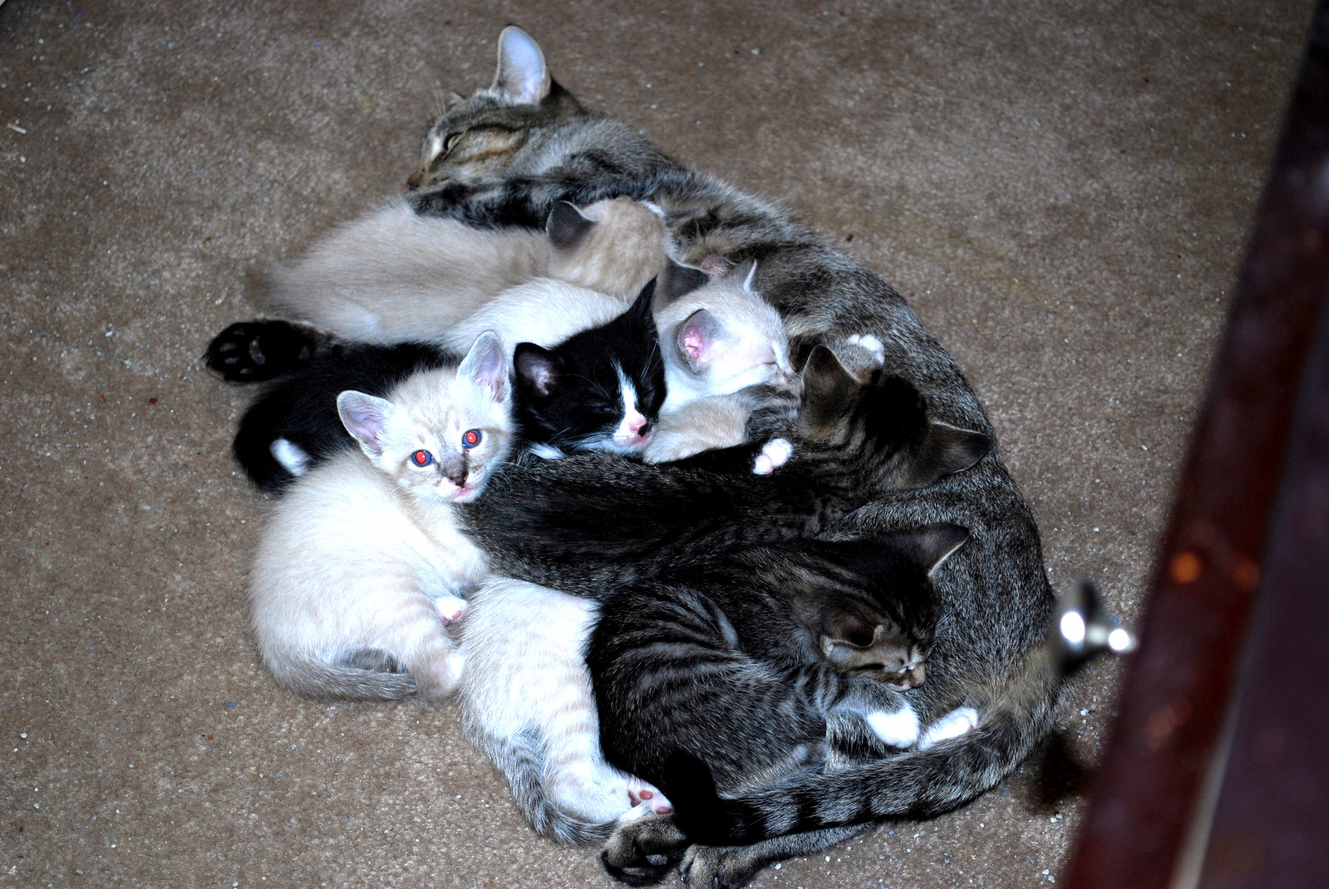 Good job mom. now this is a cat pile