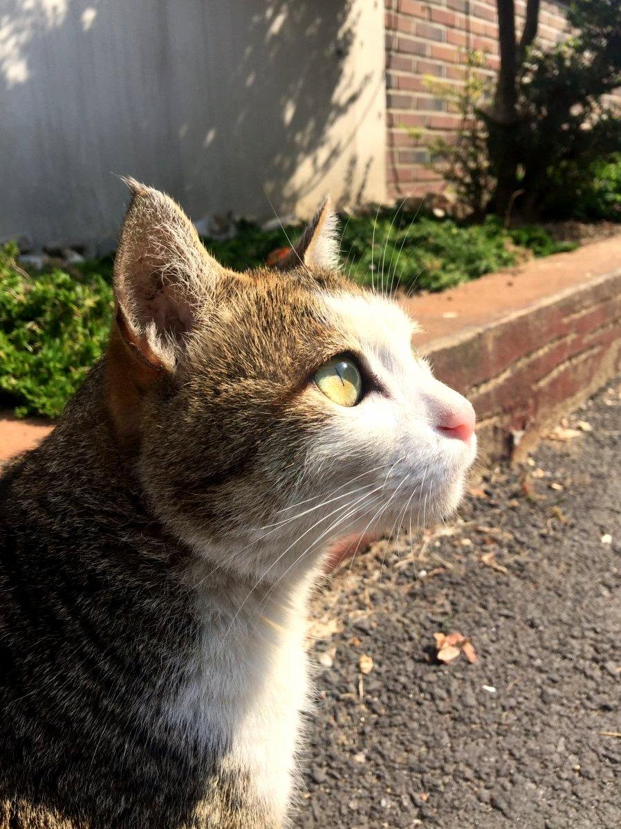 Gorgeous profile