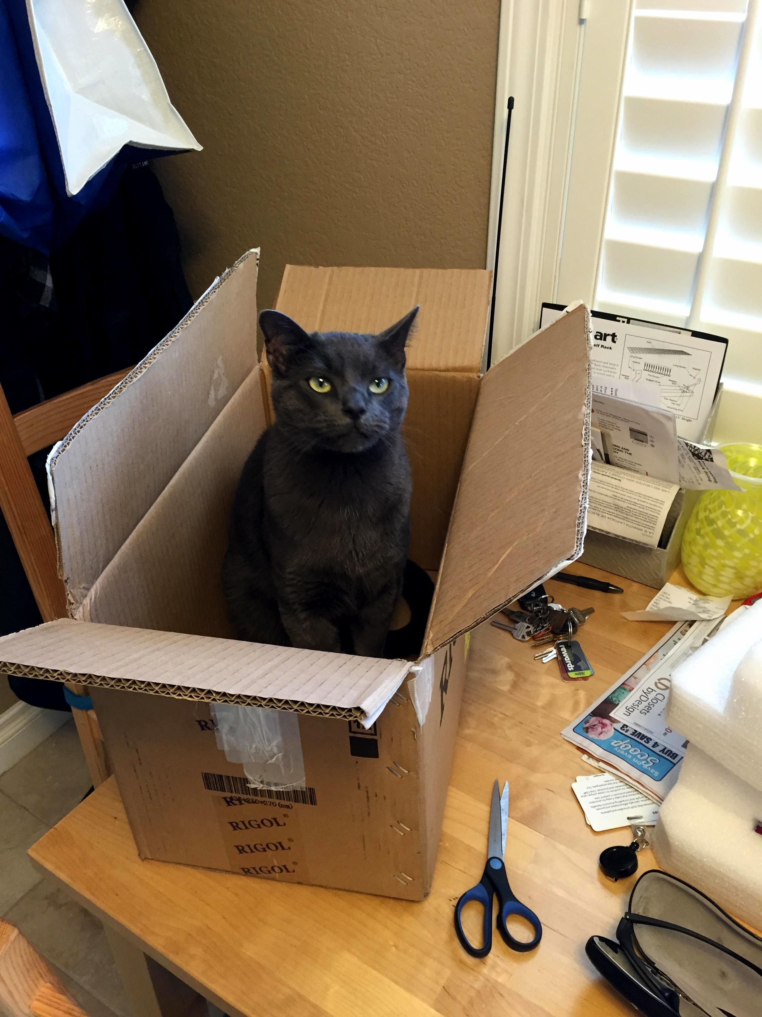 He didnt even wait for me to put the box on the floor first.