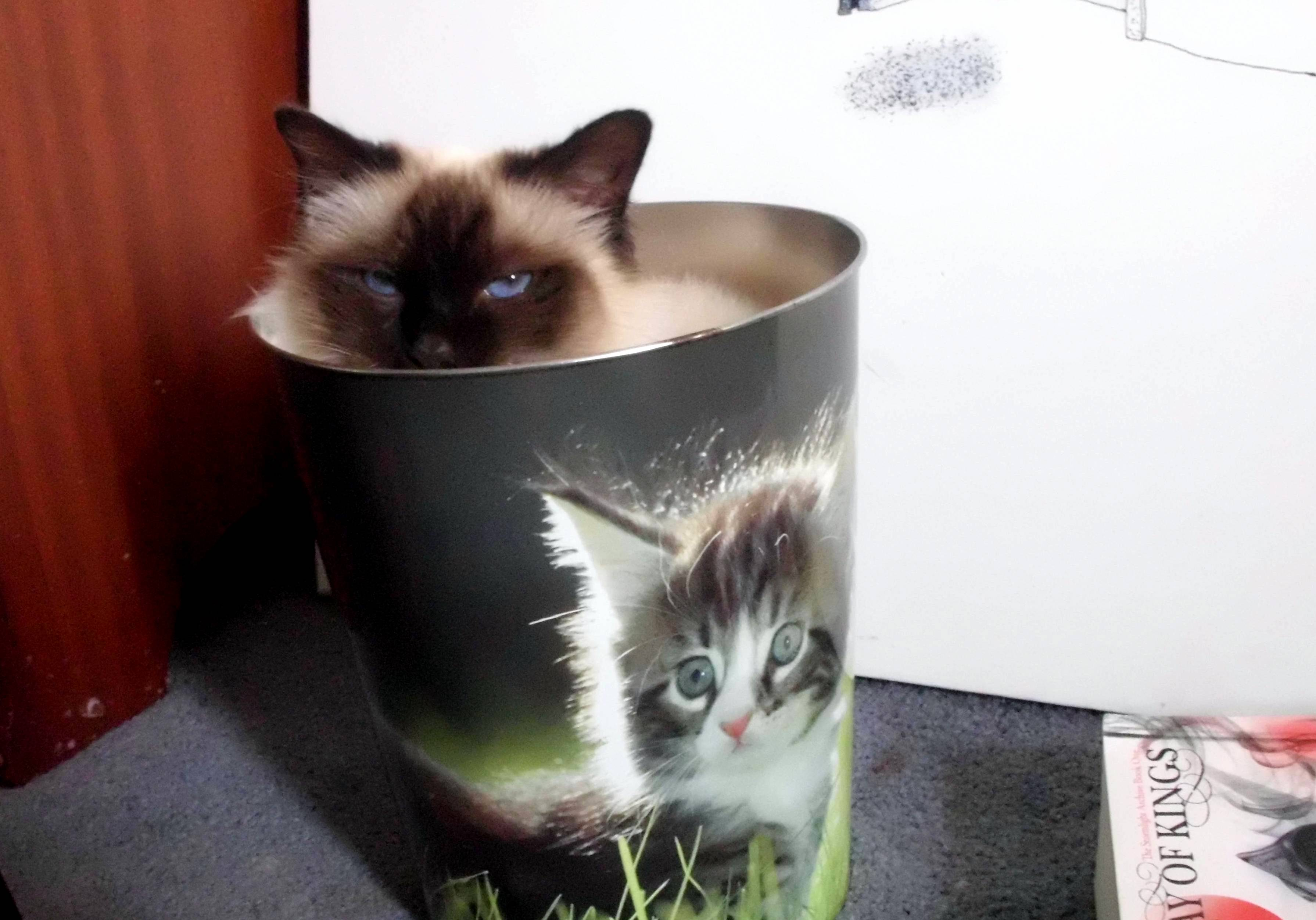 I bought myself a cat bin and knew this needed to be done