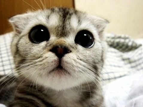 I love this cute eyes u