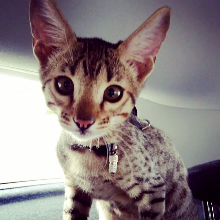 I love this little guy