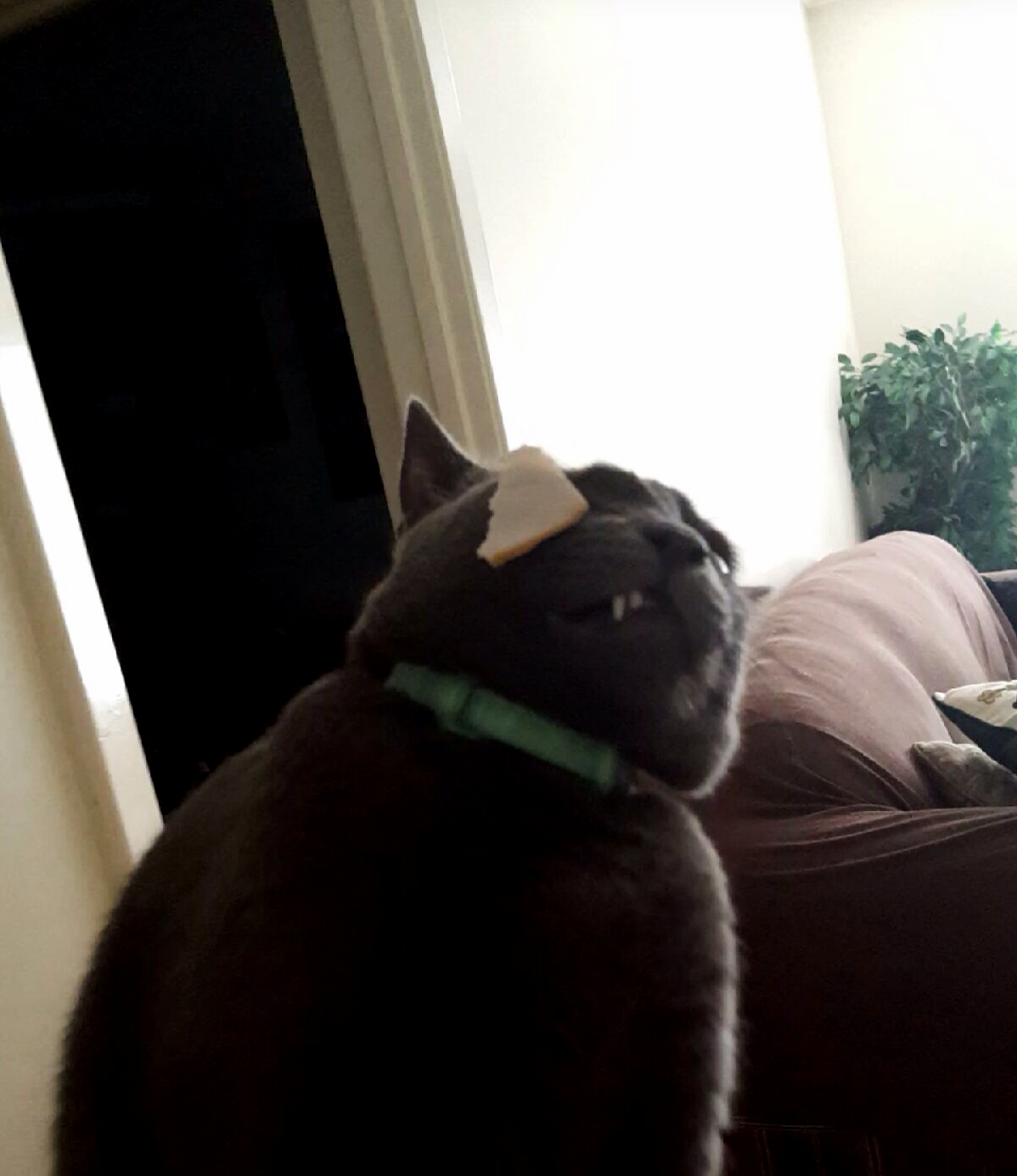 I tried to give my cat some turkey but he didnt approve.