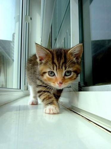 I will escape the humans…