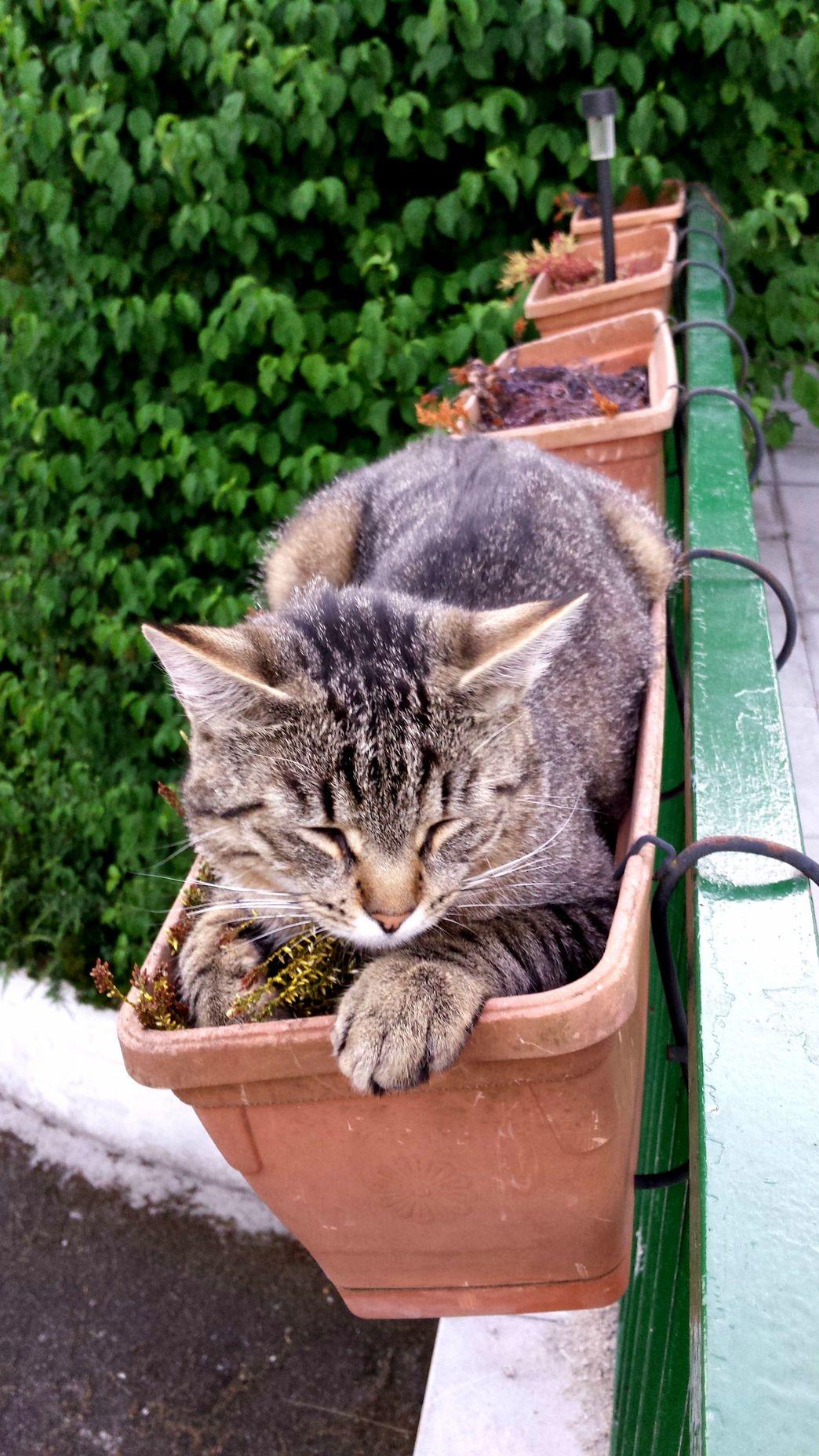 Im a plant