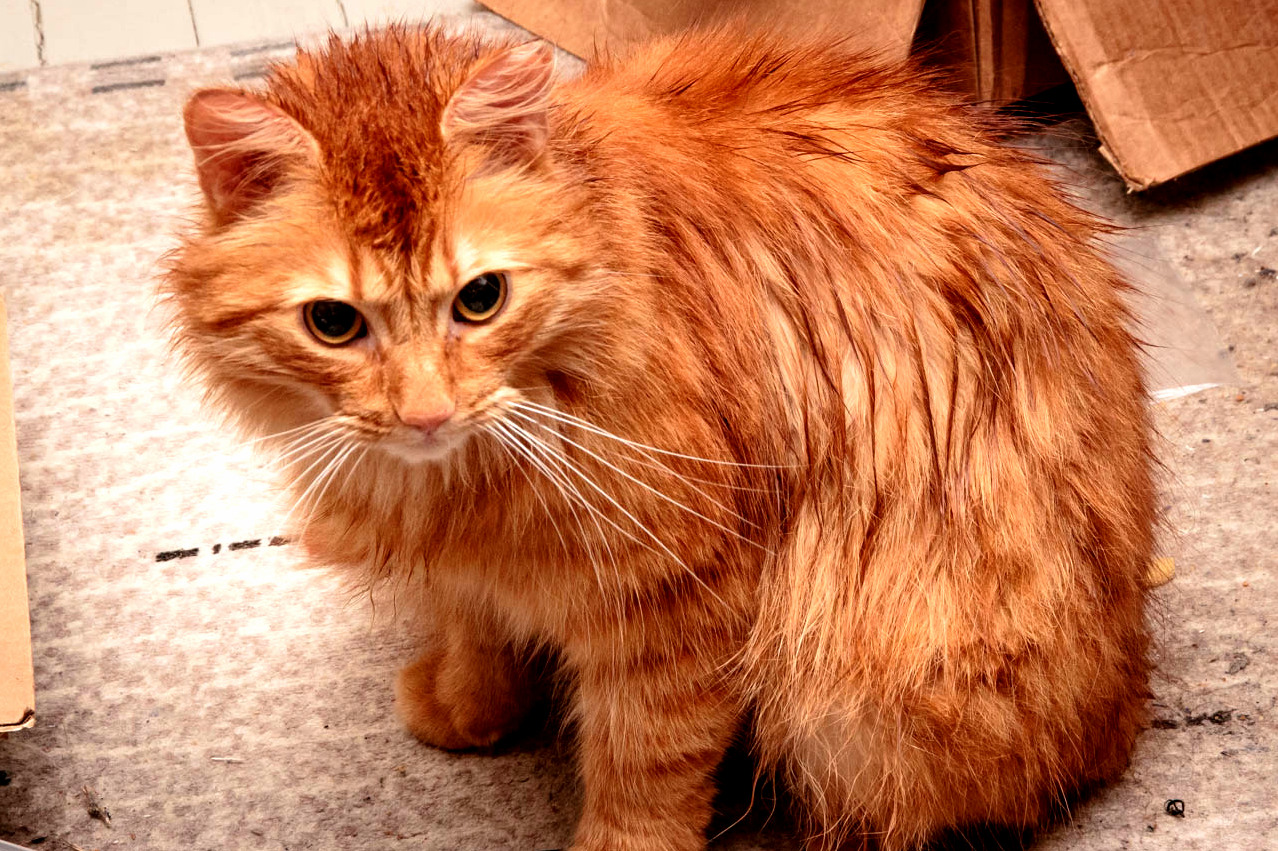 Its always lovely to welcome a soaking wet cat home. loveliness not guaranteed