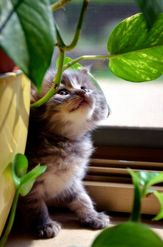 Kitten looking at a plant