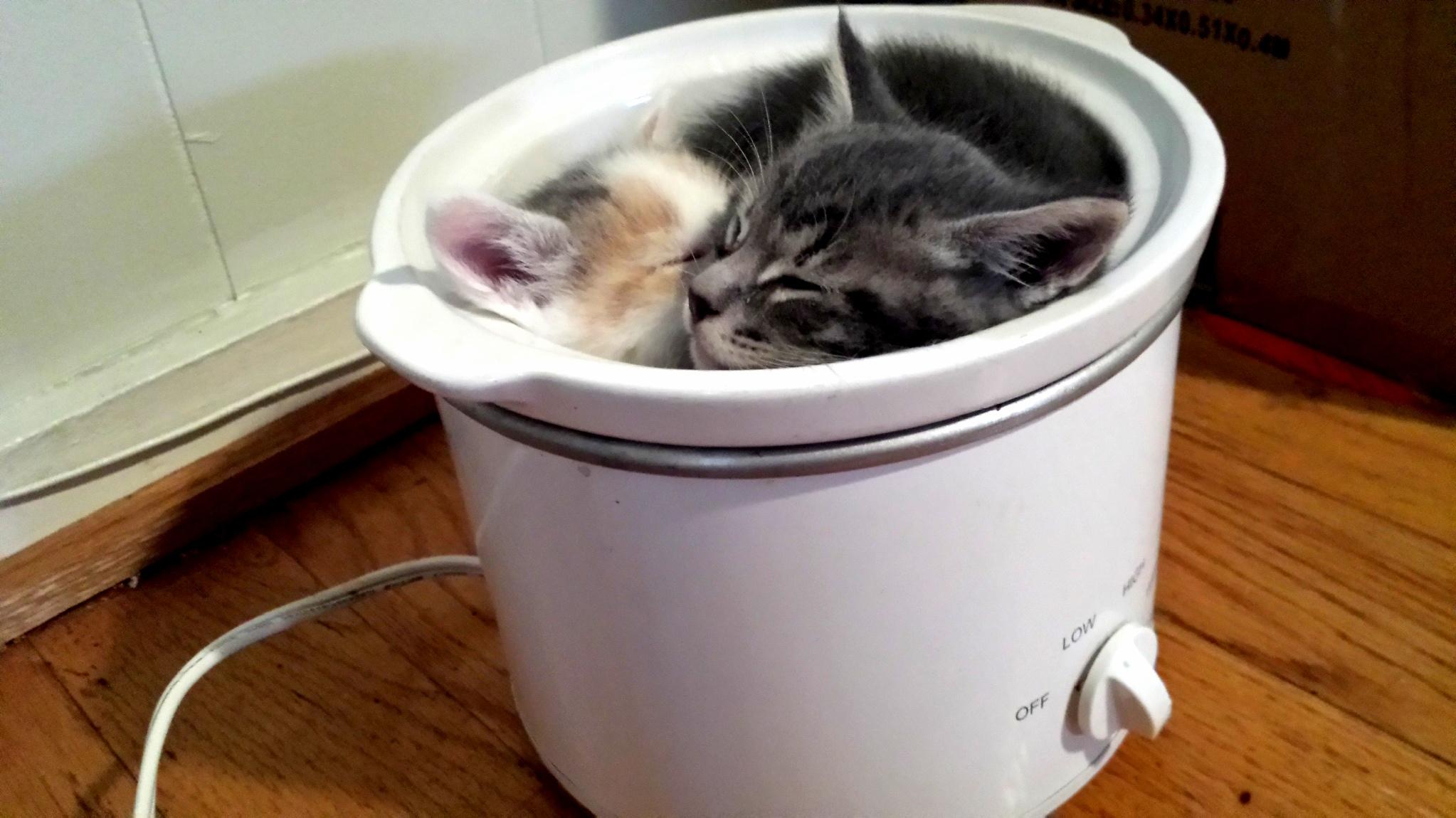Kitten stew