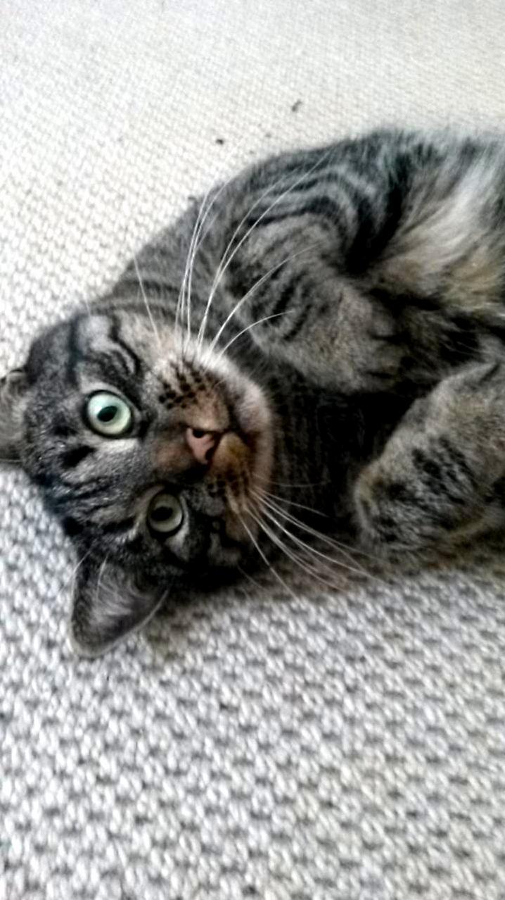 Kitty is cute.