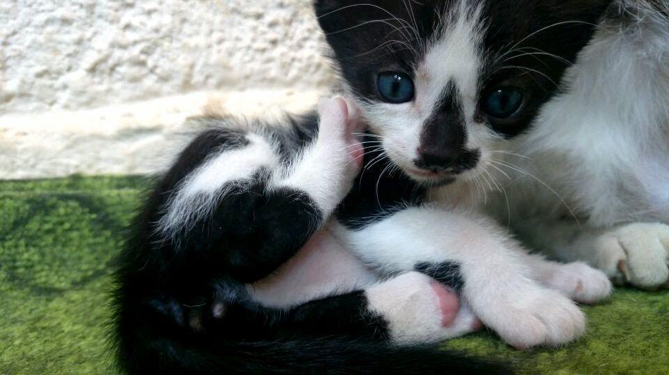 cute meet love wiki