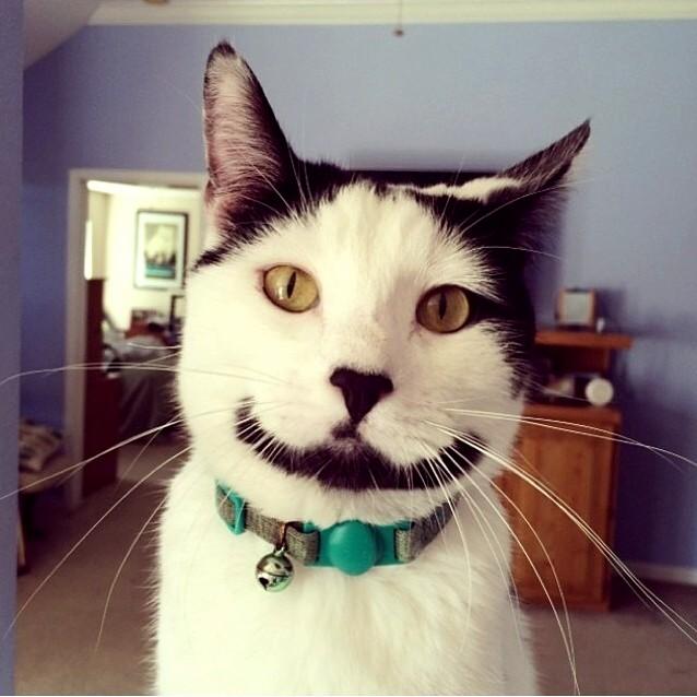 Meow so serious