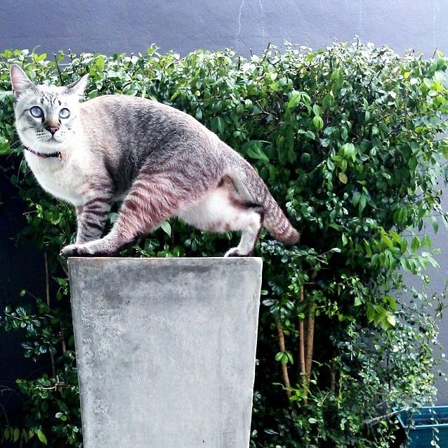 Miao san is like a garden sculpture