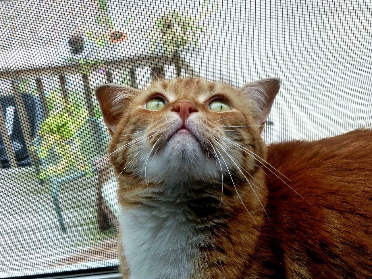 My cat focusing in a flattering pose