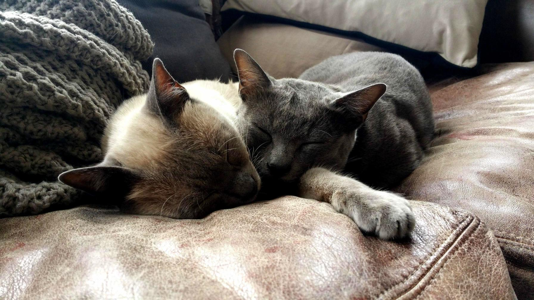 My cats – spaceman and stockwell – are the best of friends
