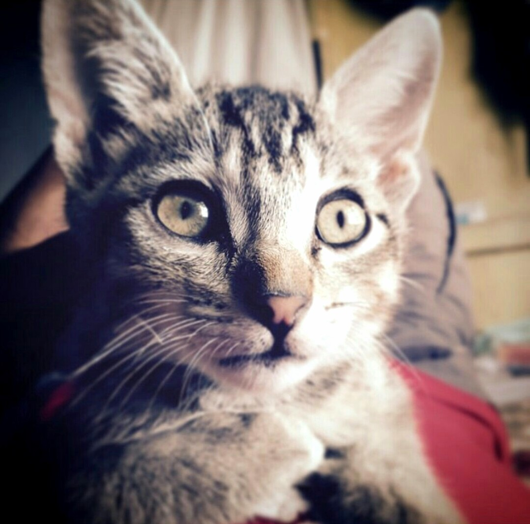 My friend recently lost this amazing kitten