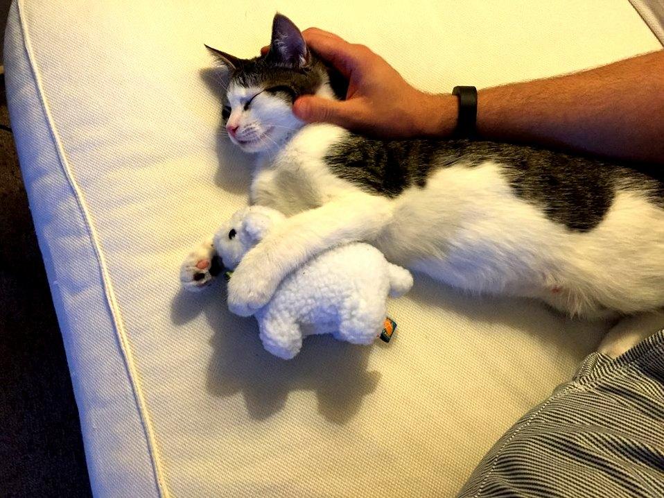 My kitten loves his lamb.