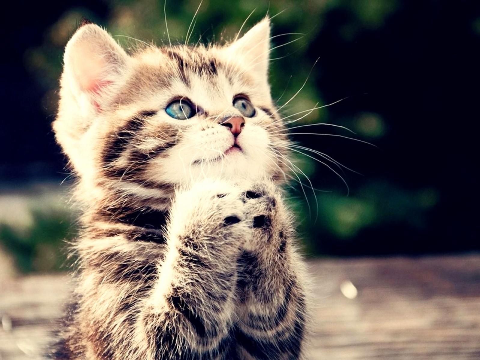 O god listen to my prayers