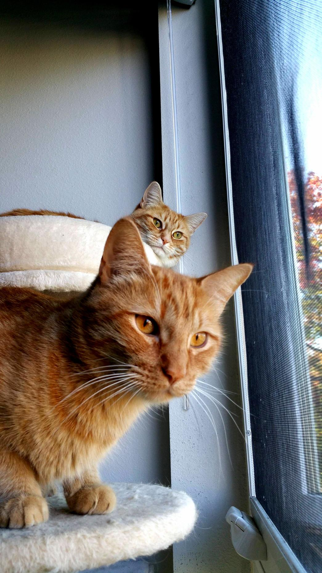 Oliver and olivia love their morning window time