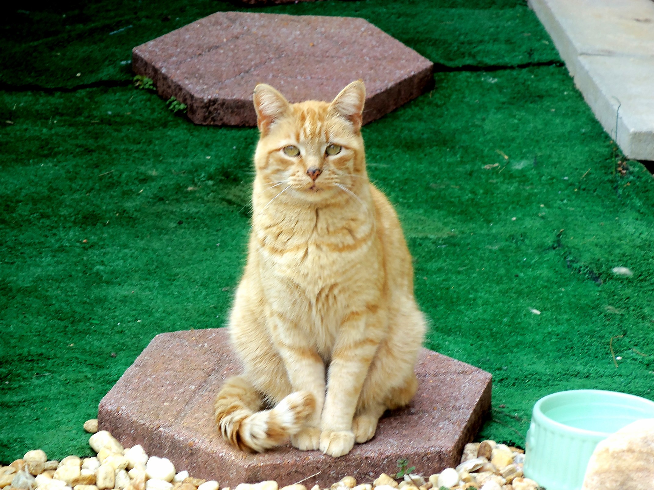 Orange cats you say