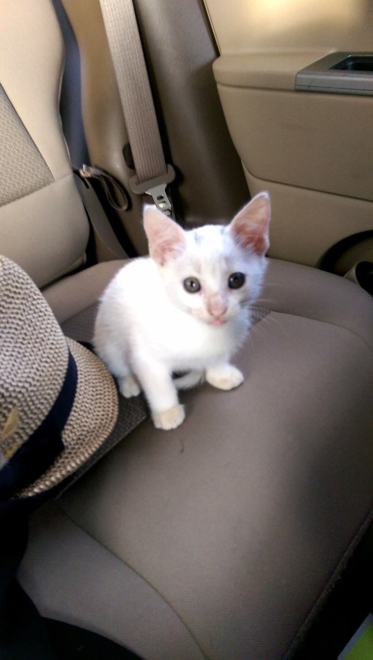 Picked this little lady up by the highway. we think shes deaf.