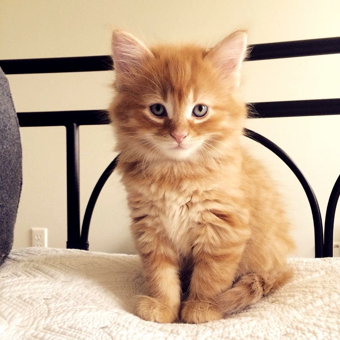 Cute Cats HQ Free Pictures Of Funny Cats And