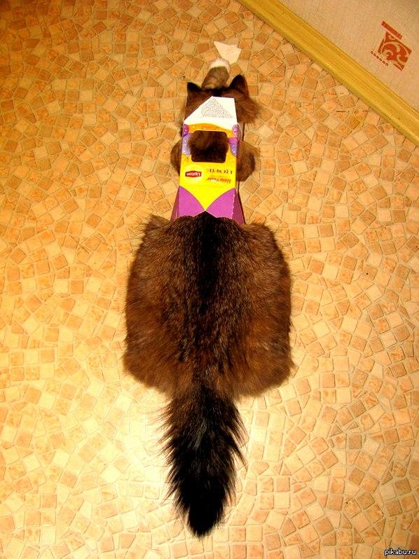 Tea cat – no sugar please favorite funtime get into boxes