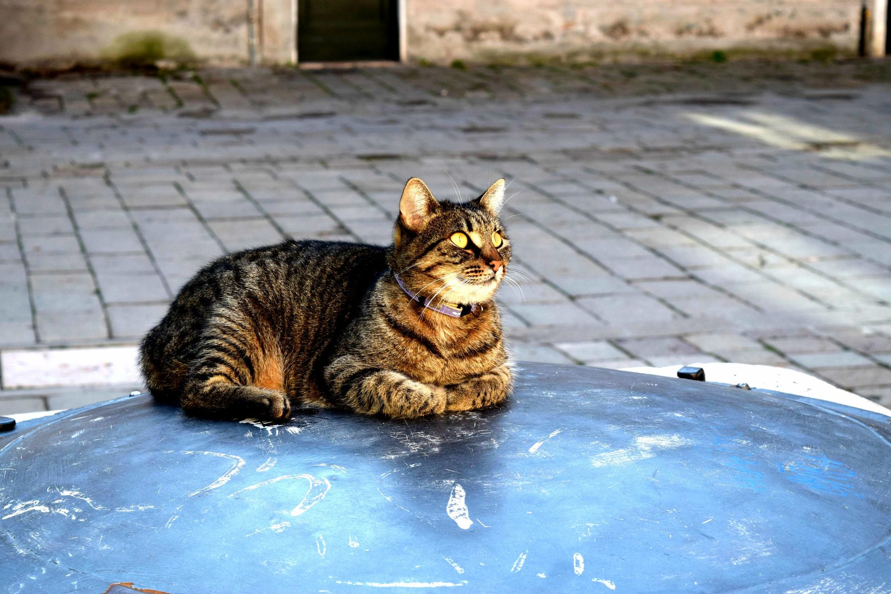 This inscrutable venetian cat we encountered.
