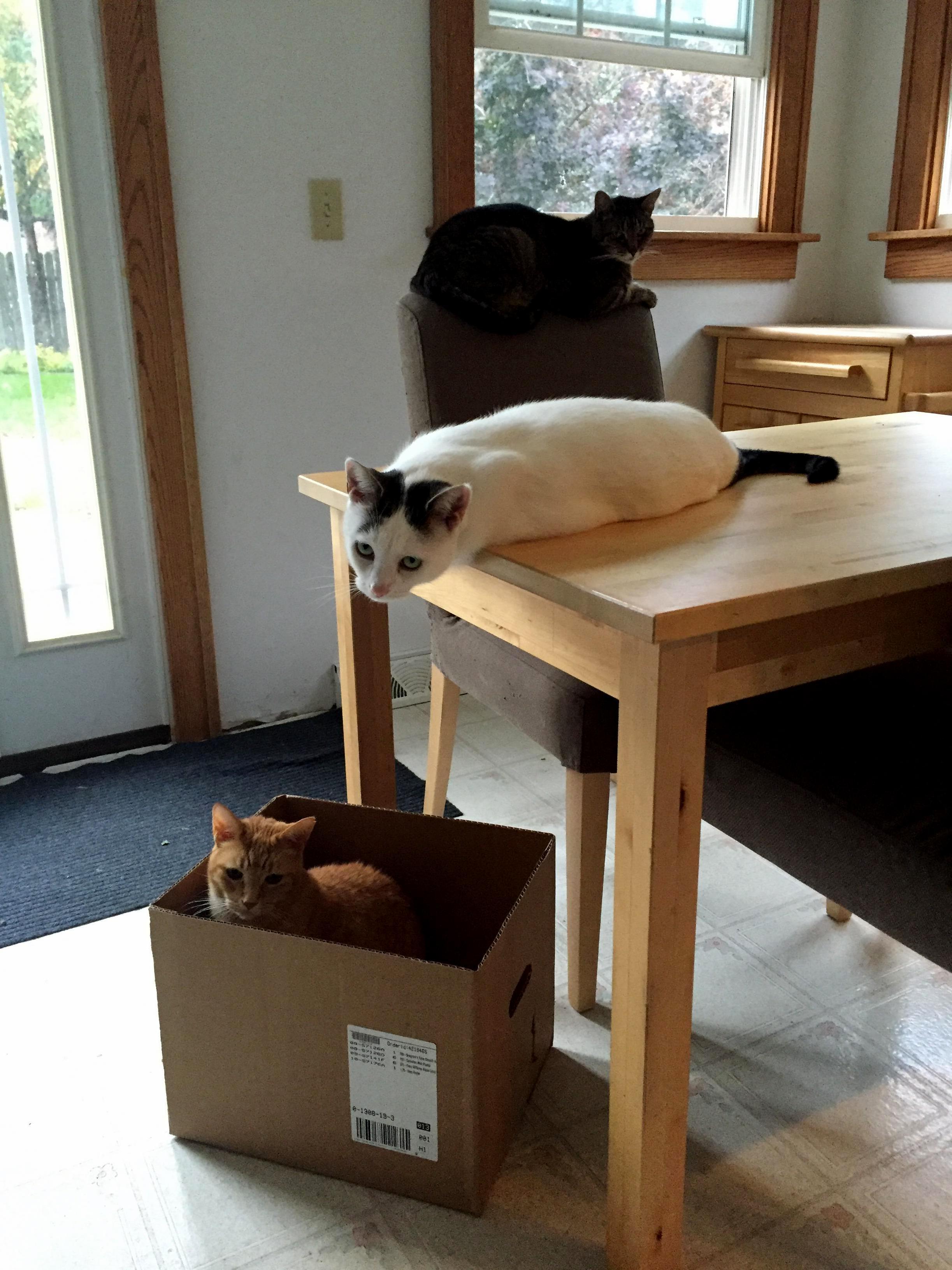Three levels of cat