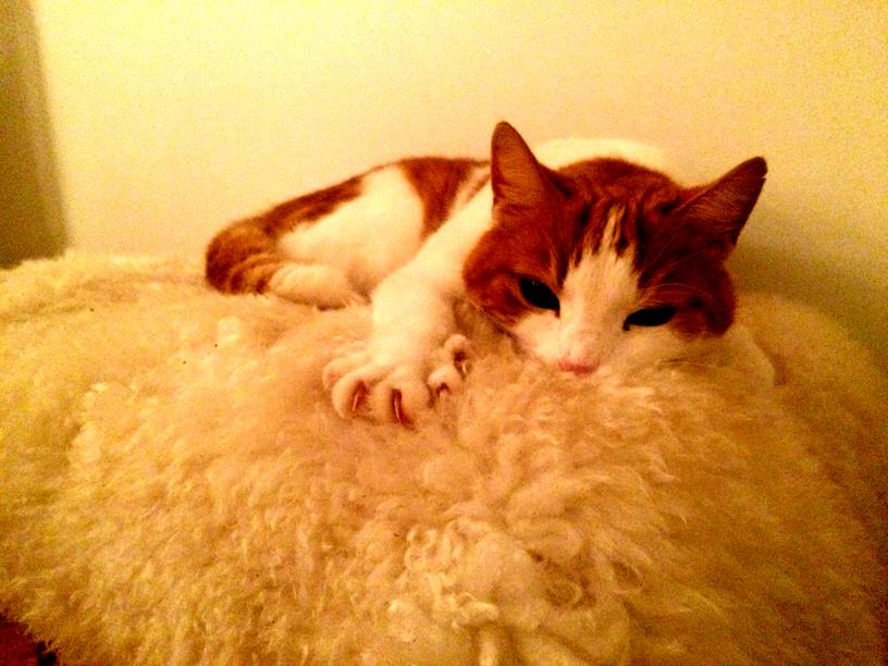 Tobbi and his fur
