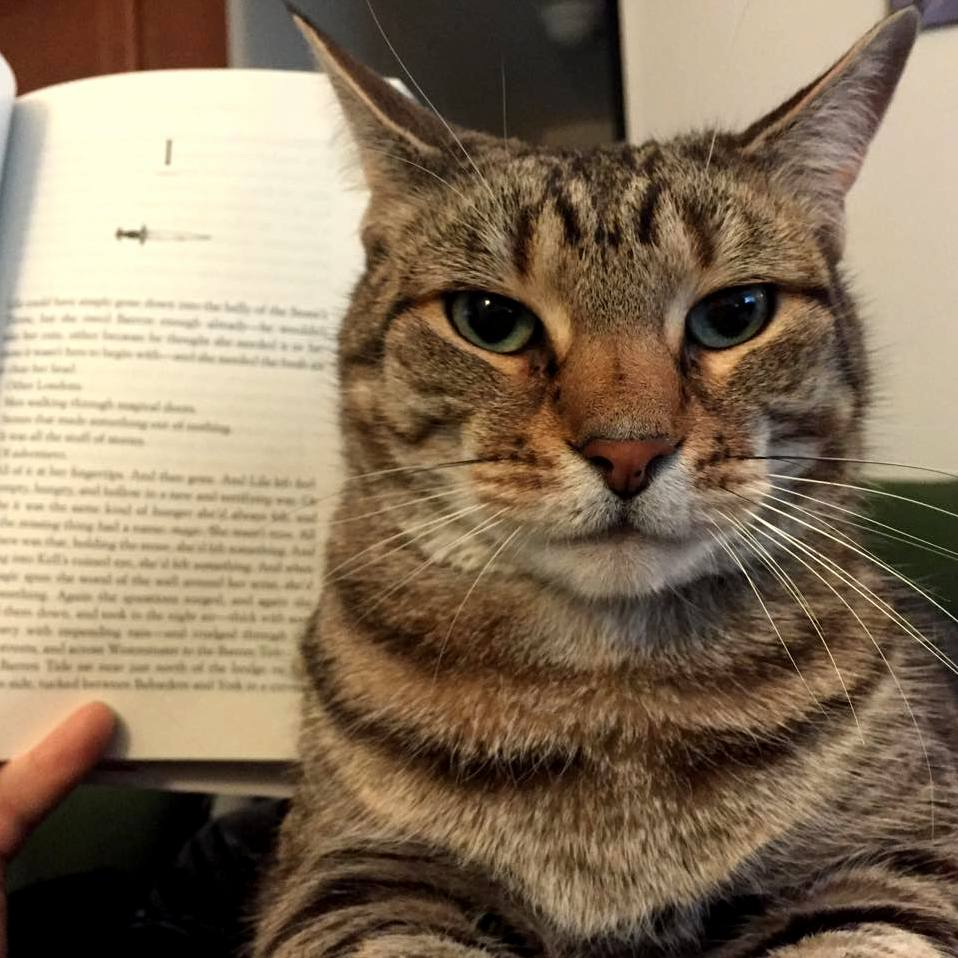 Trying to read with cats