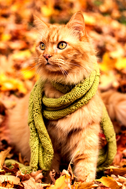 With a scarf