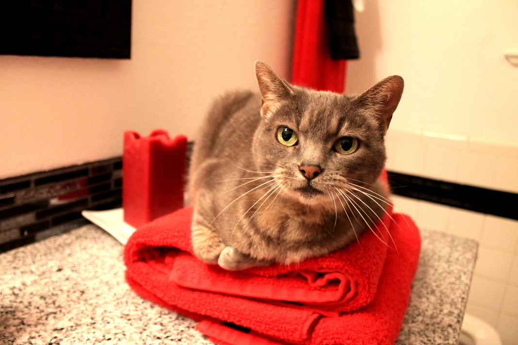 Your clean towels havent seen em.