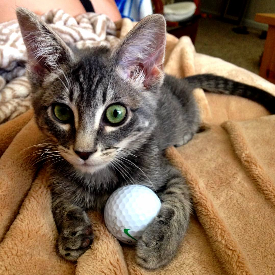 Ziggy and his best friend mr. golf ball