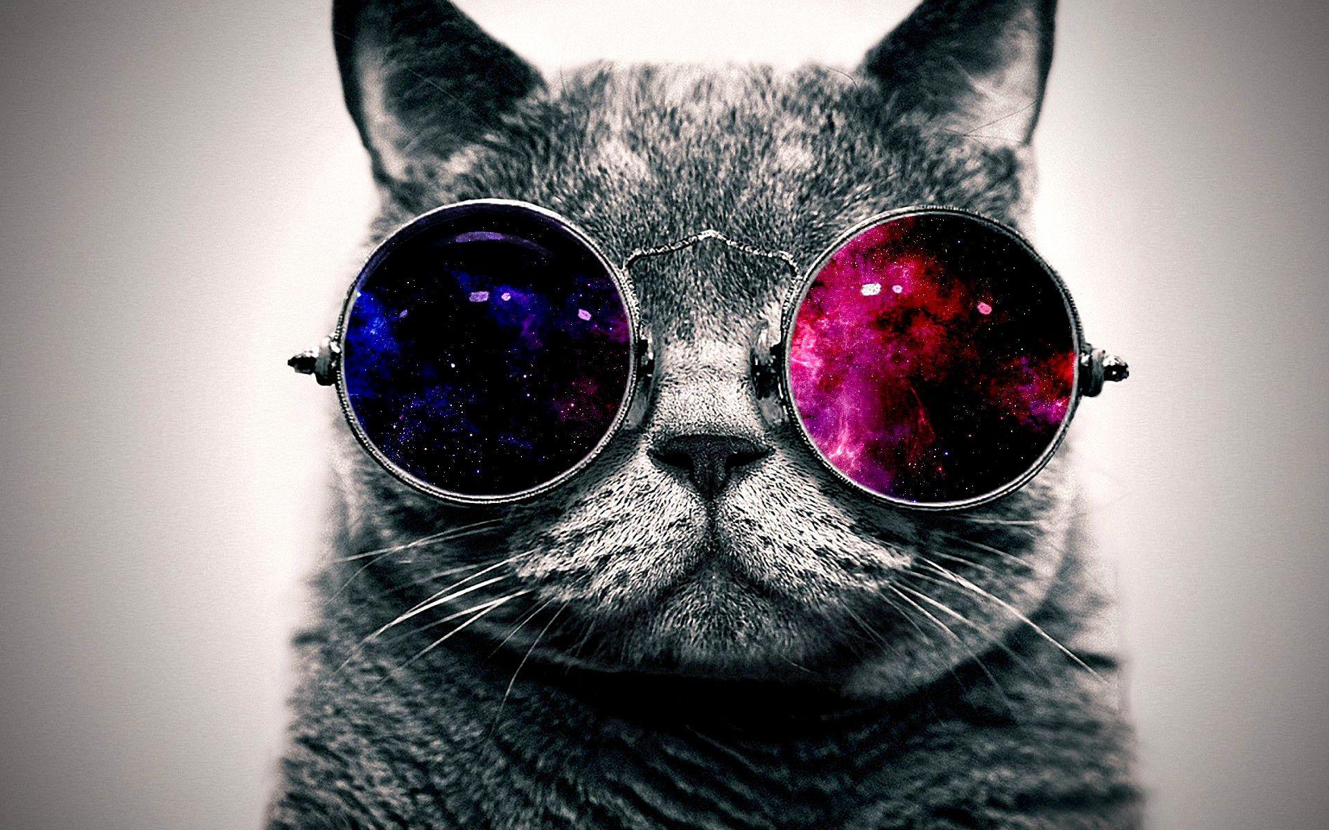 21st century cat
