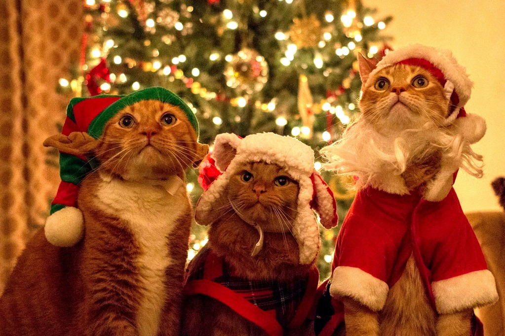 5th annual christmas cats -xpost from rpics