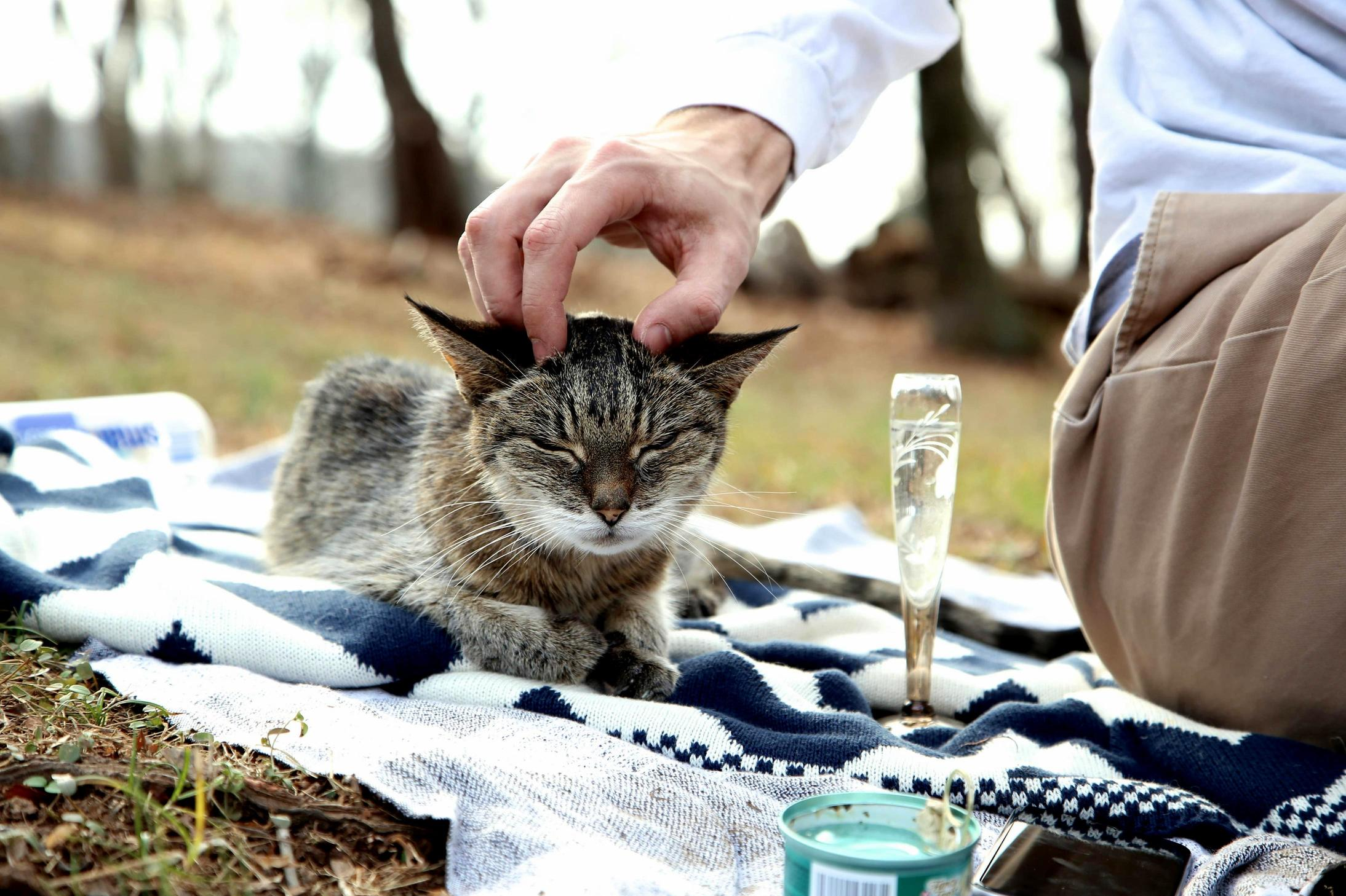 I dont always drink champagne but when i do its water and im having a picnic on my meowntain.