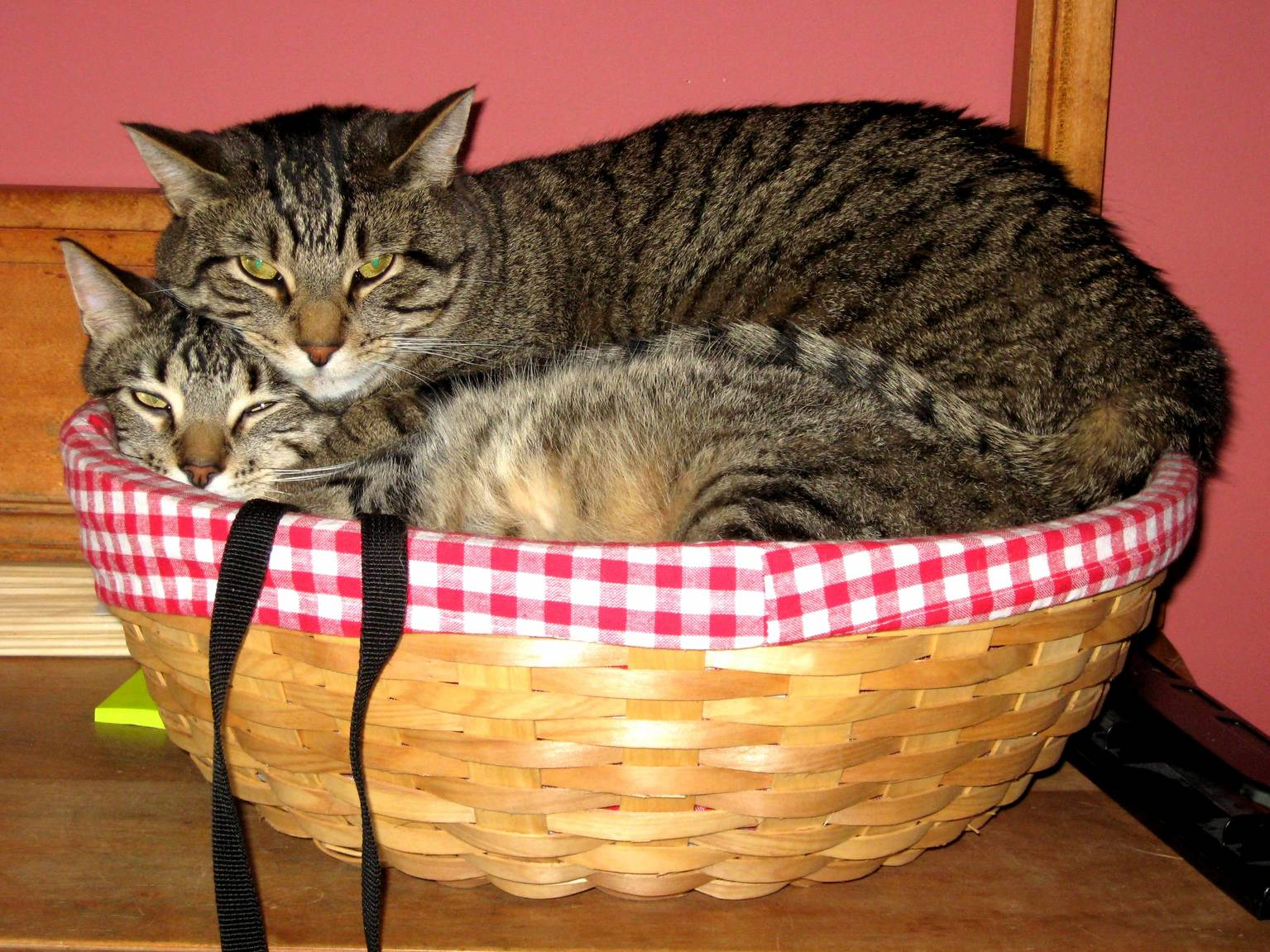 I dont think they quite fit in this basket.