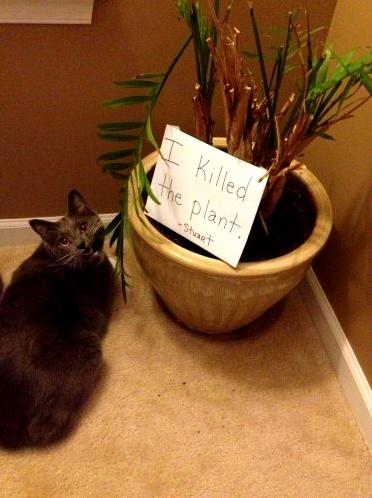 I killed the plant