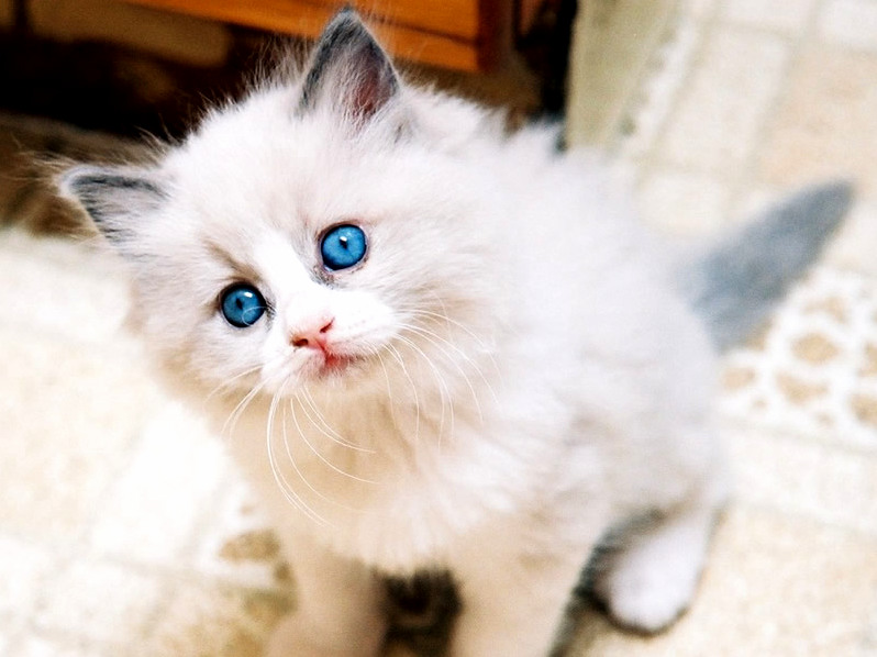 My beautiful cat