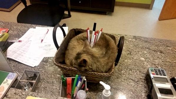 Office cat making himself useful