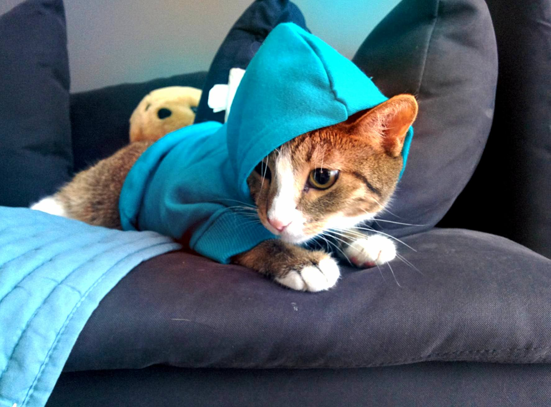 Pixels not a fan of the hood life