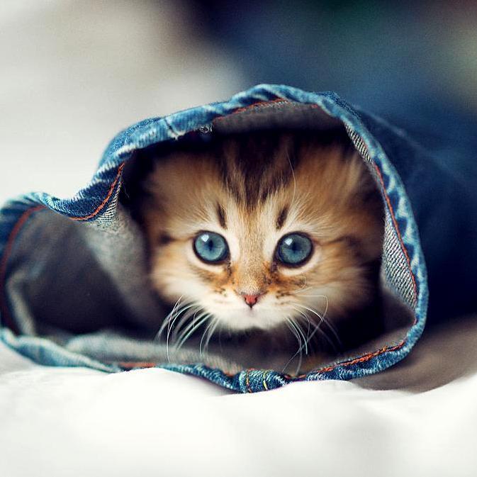 Playing hide and seek