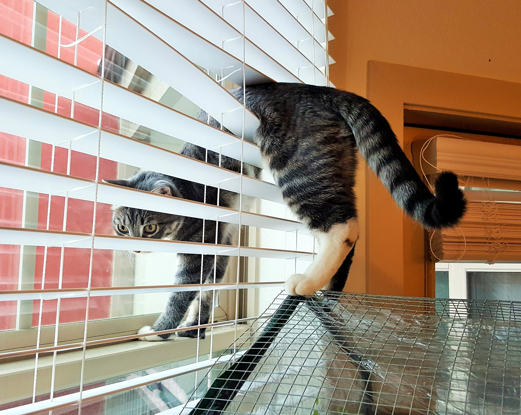 Sif finds creative ways to stare out the window.