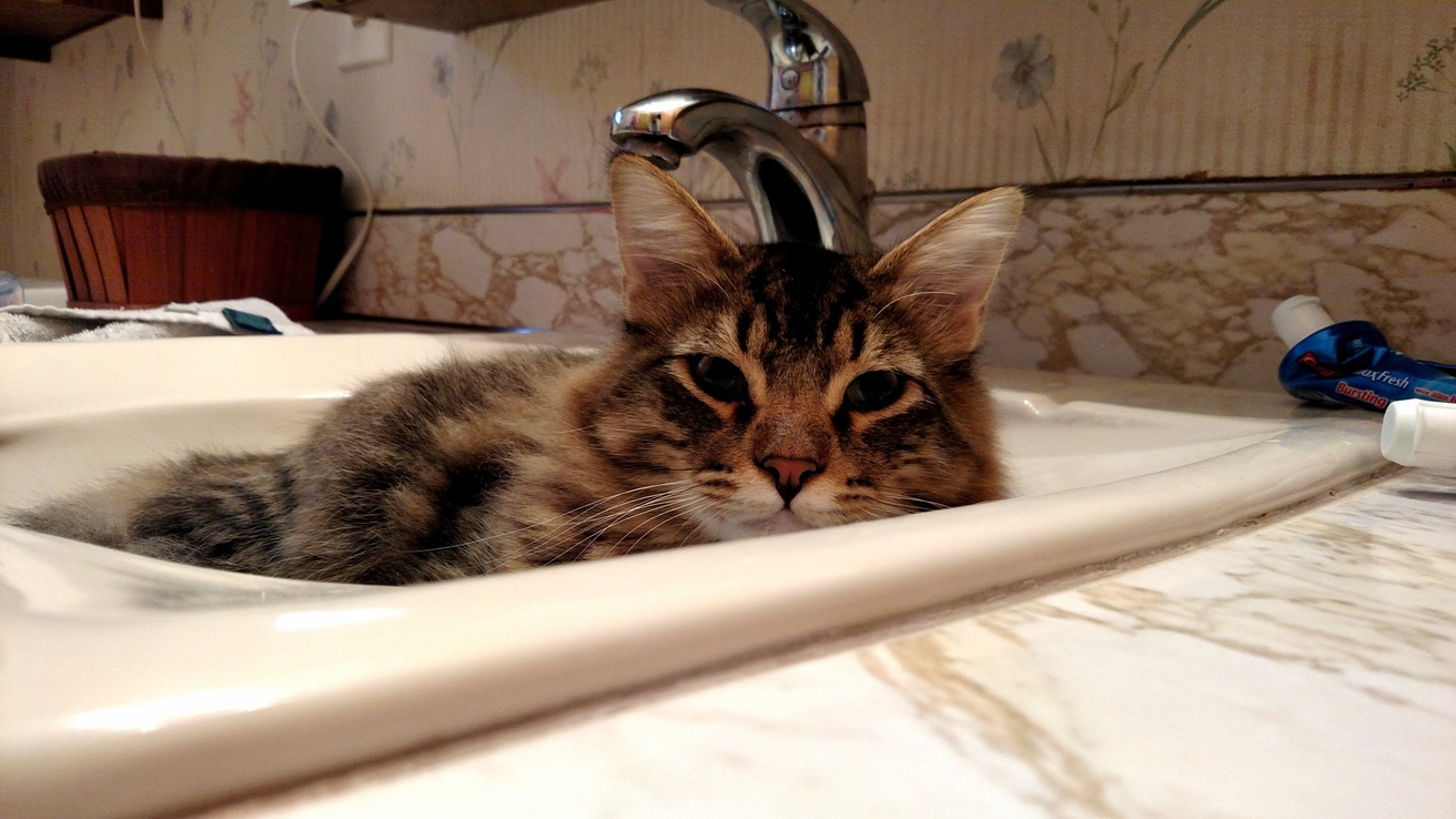The territorial sink-cat. wash at your own risk.