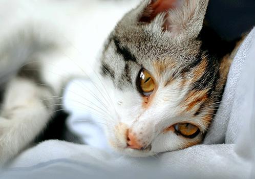 A beautiful handsome cate sleep……