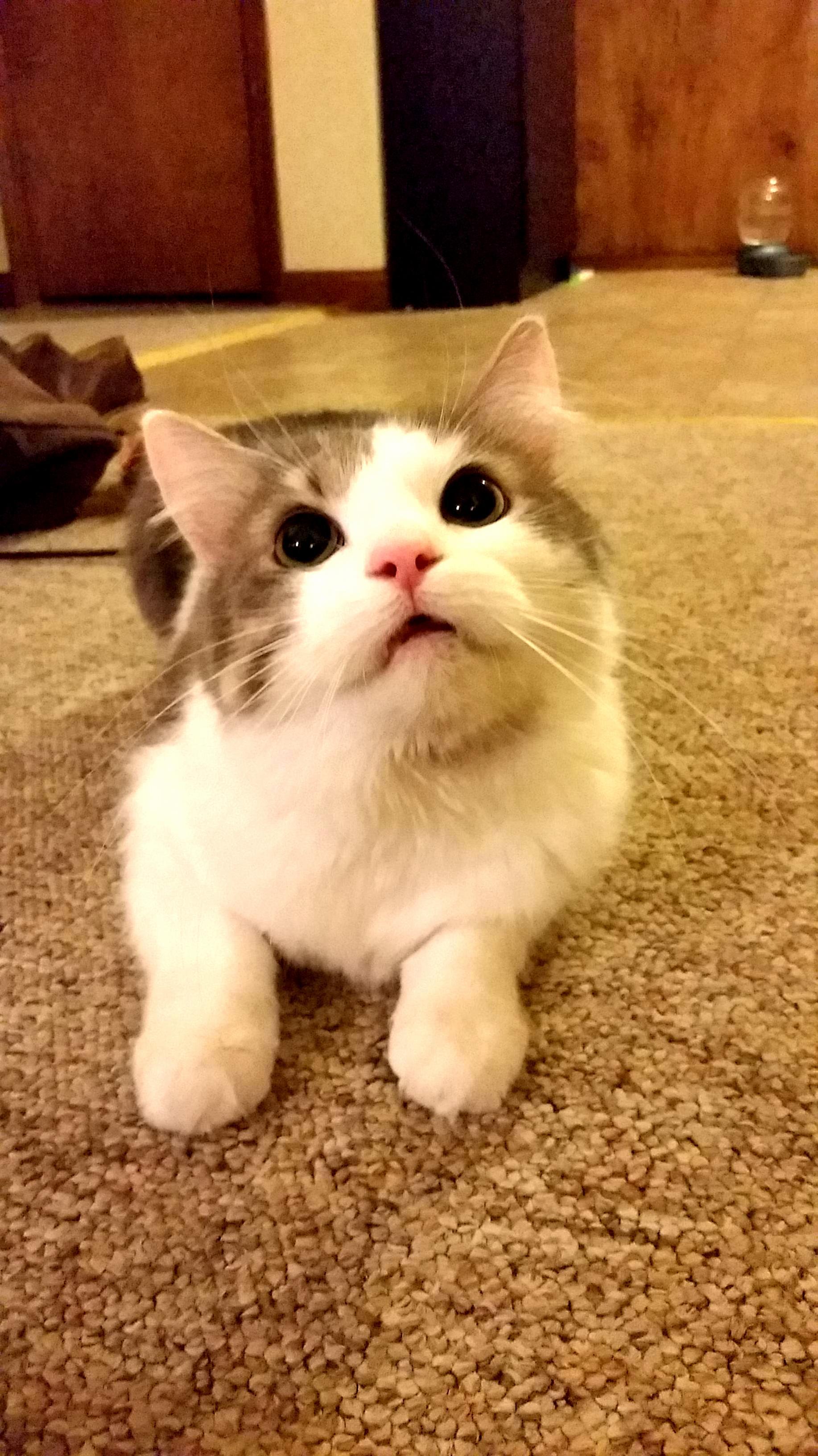 Adorable murderous eyes