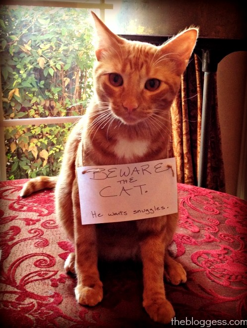 Beware the cat. he wants snuggles.